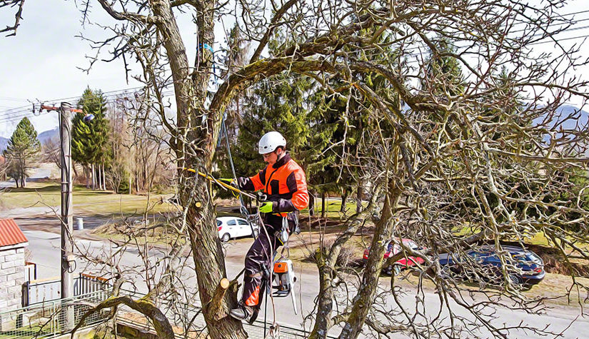 Never Remove A Tree Before Considering These 8 Things
